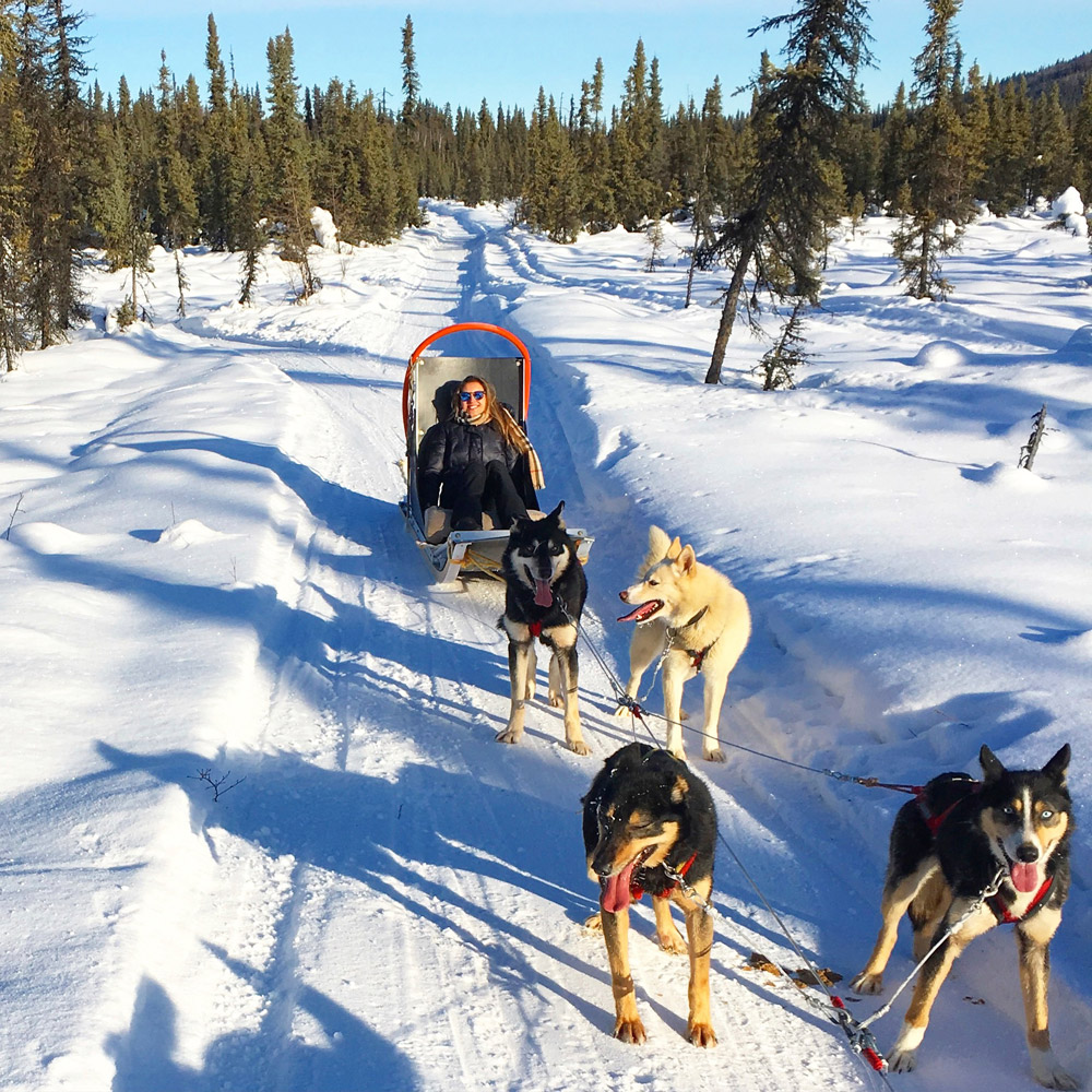 Fairbanks Dog Sled Rides